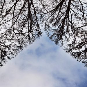 TREES_PIRAMID_MG_0444
